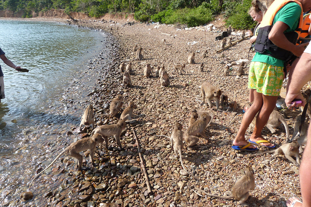 Так встречают туристов на острове Обезьян. Они совершенно не боятся людей и прыгают по ним как по деревьям