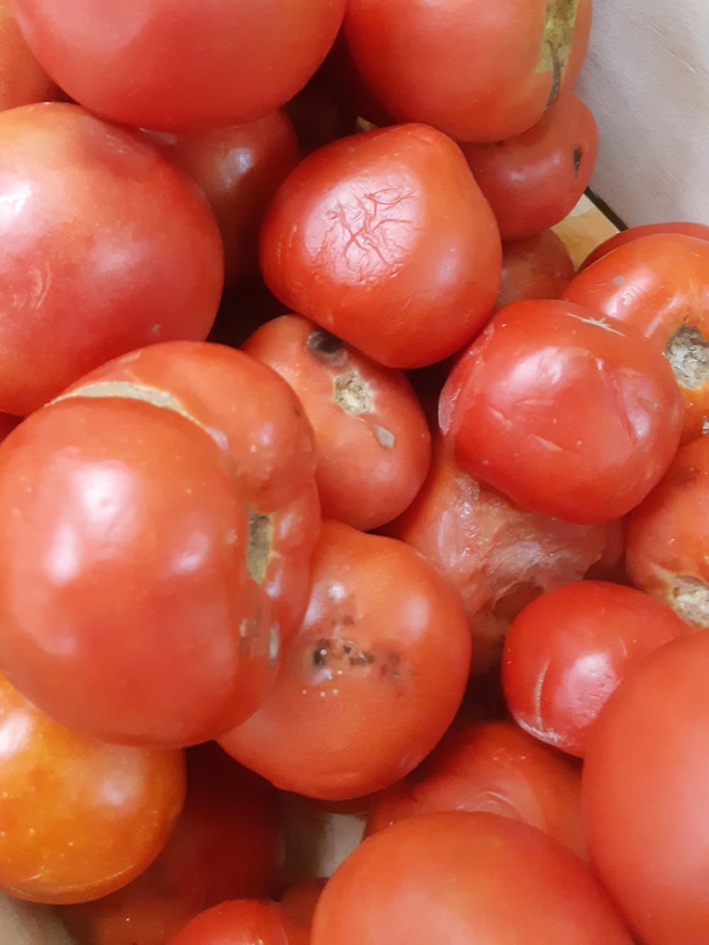 В магазине у дома выбрасывают такие помидоры. На мой взгляд, они вполне годятся на салат