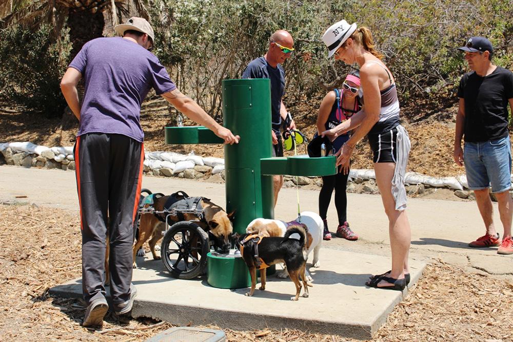 Питьевой фонтан для людей и животных. Фото: neighborland.com