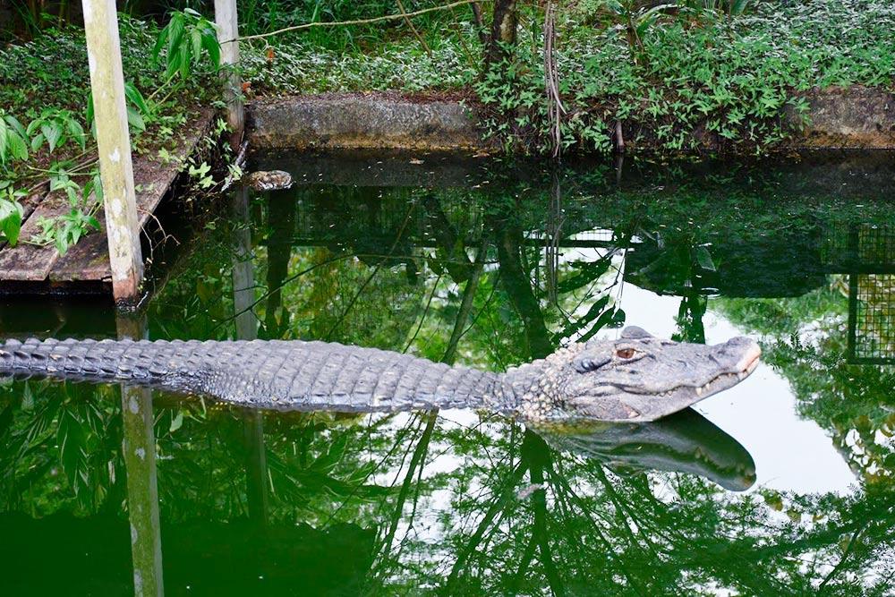 Улыбка крокодила
