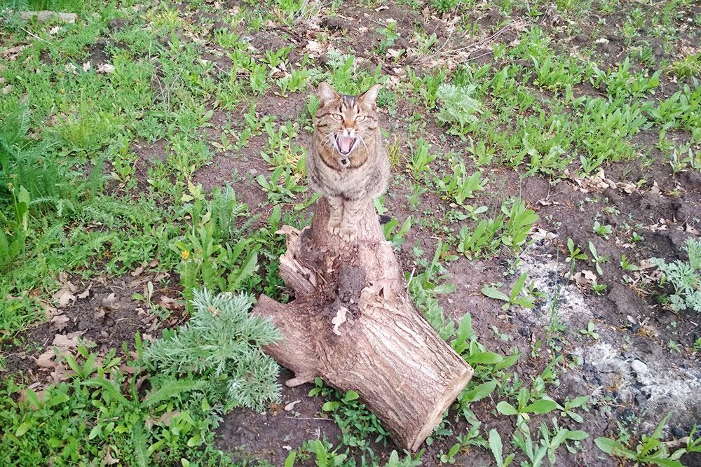 Кот в естественной среде обитания