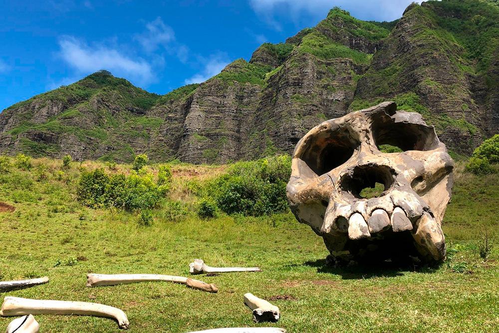 Площадка, на которой собраны артефакты сосъемок фильмов «Конг: Остров черепа» и «Мир юрского периода»