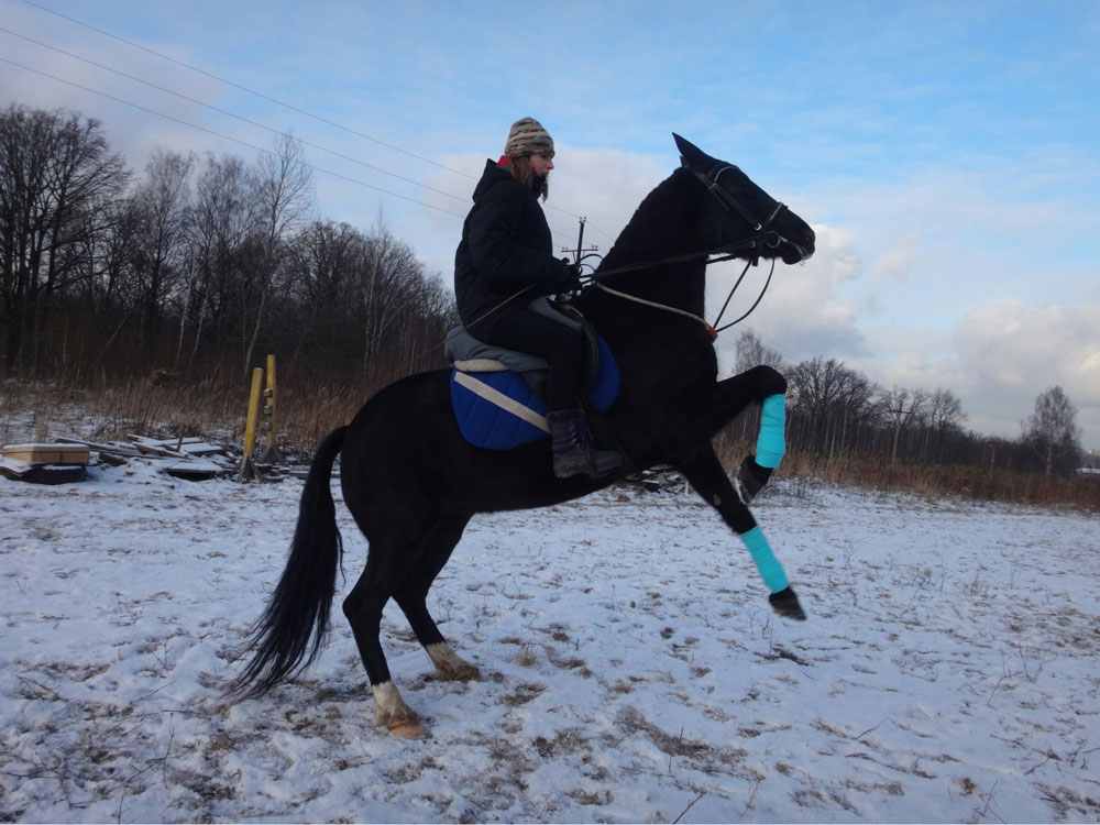 Бирюзовое на ногах лошади — это бинты. В этот день мы прыгали через препятствия и надели бинты, чтобы снизить нагрузку на ноги