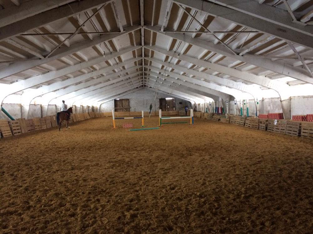 Как выбрать лошадь для выездки    Как выбрать лошадь для выездки