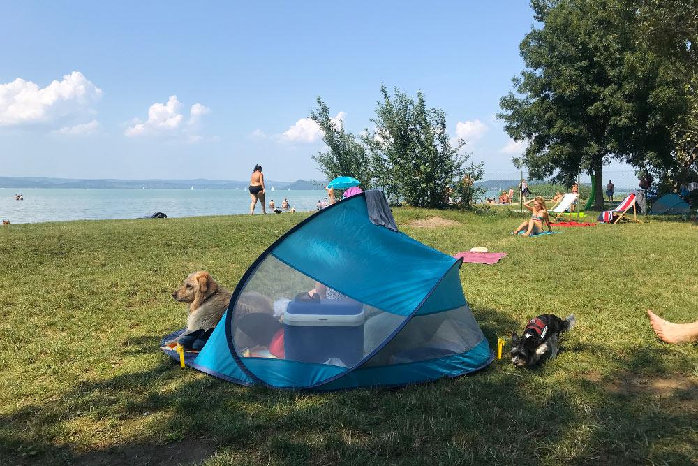 На дог-френдли пляж вБалатонфёльдваре многие берут ссобой вот такие палатки