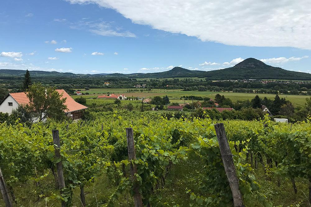 Один из самых значимых иизвестных винодельческих регионов — Бадачонь. 1422гектара виноградников раскинулись насклонах вулканов, потухших тысячилет назад
