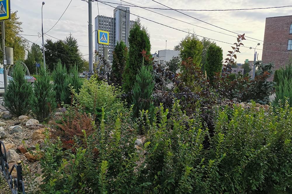 У нас очень зеленый район, красивый ландшафтный дизайн