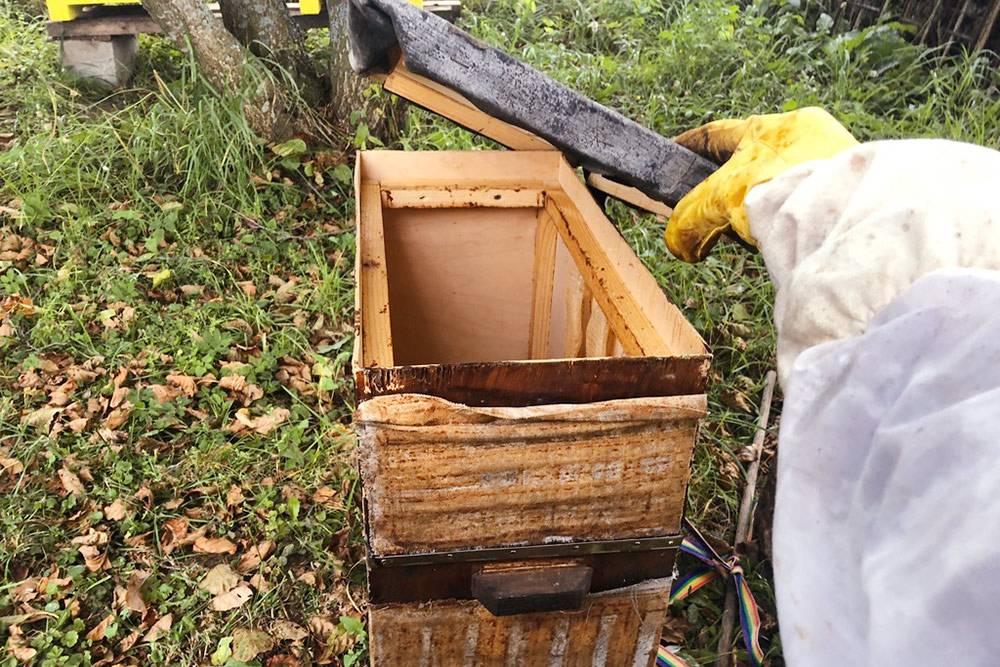 Конструкция ловушки длядиких пчел довольно проста: это ящик из фанеры, в который ставится пять рамок. В этом году я поймал один рой. Больше не планирую заниматься роеловством, потомучто, помимо риска обзавестись весьма злобными дикими пчелами, с пойманным роем вы можете занести на пасеку различные пчелиные болезни