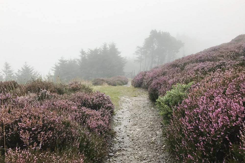 Дождь в Ирландии часто напоминает мист — увлажняющий спрей длялица и тела. Можно сэкономить на косметике