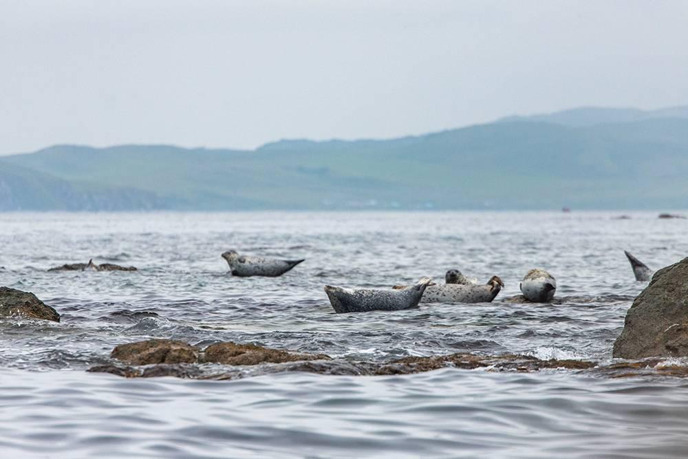 Тюлени отдыхают на солнце