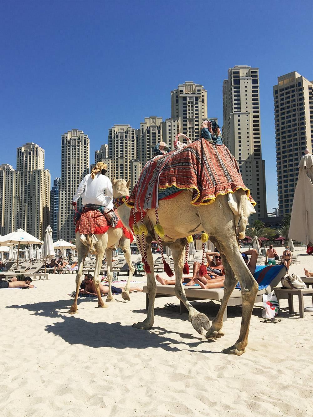 Дубай — город контрастов
