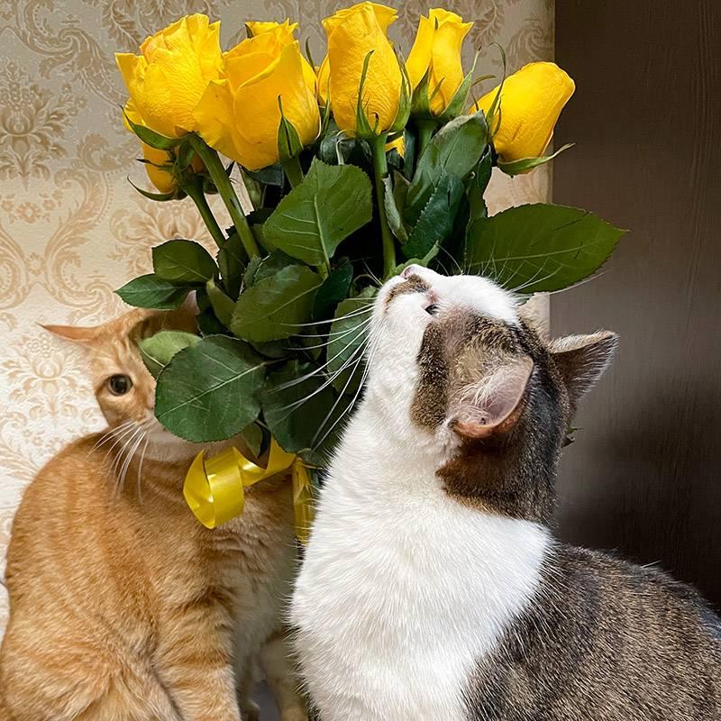 Я люблю цветы, но растущие в горшках не держу: шерстяная ОПГ работает слаженно, обгрызая листья и разбрасывая землю. Поэтому когда В. приносит букет, радости полные штаны и у меня, и у котов