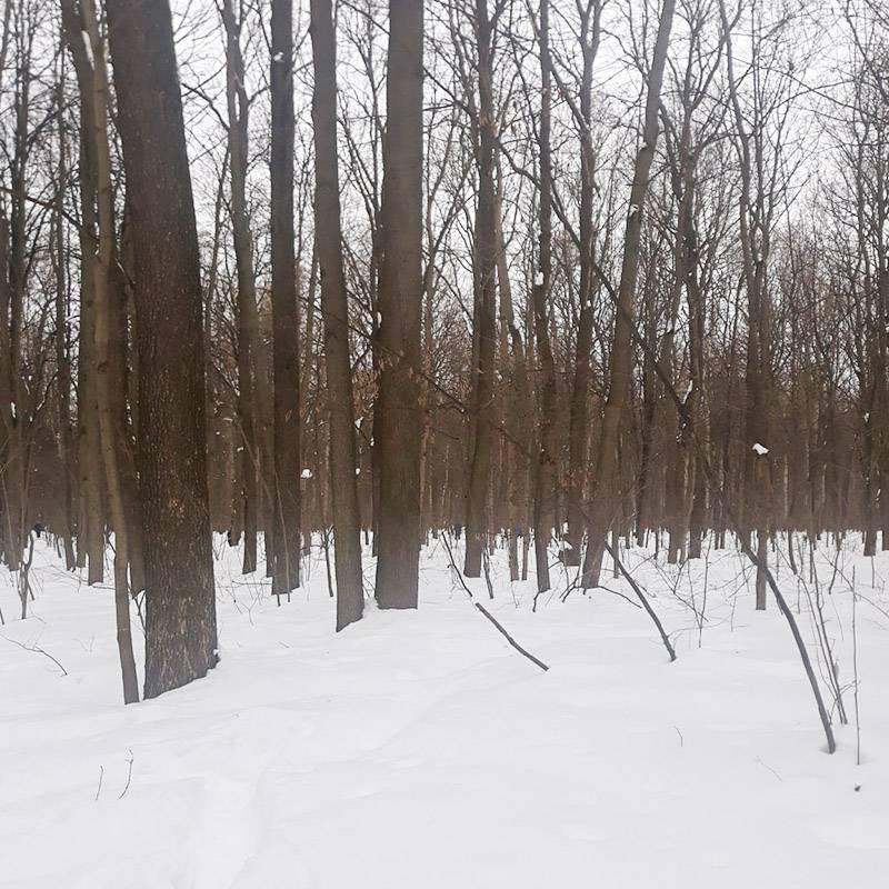 Щелковский хутор возле нашего дома. Зимой уныло, зато осенью — красота