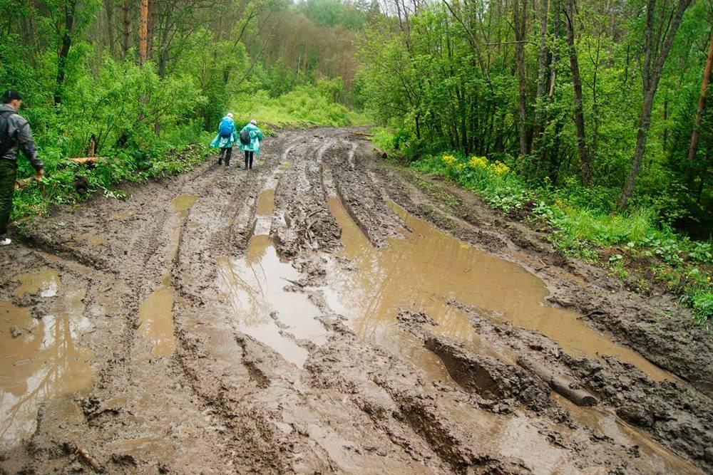 После дождя лесные дороги иногда выглядят вот так