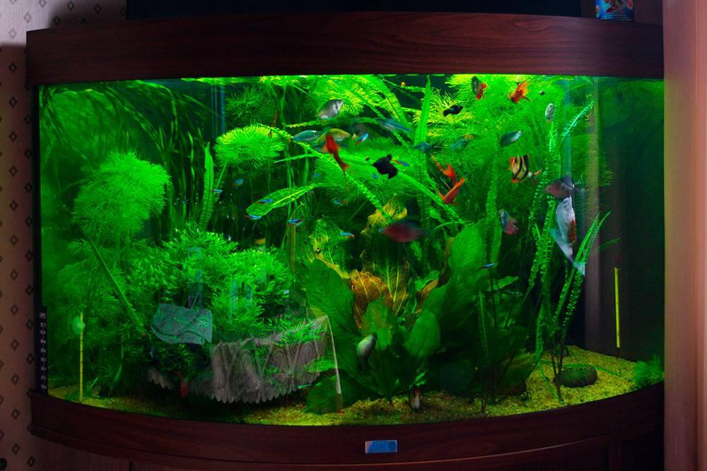 Наш домашний аквариум Juwel Trigon на190л стропическими рыбами