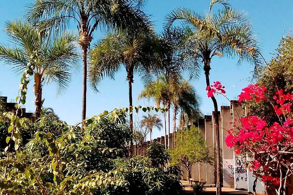 На территории университета было много пальм изелени