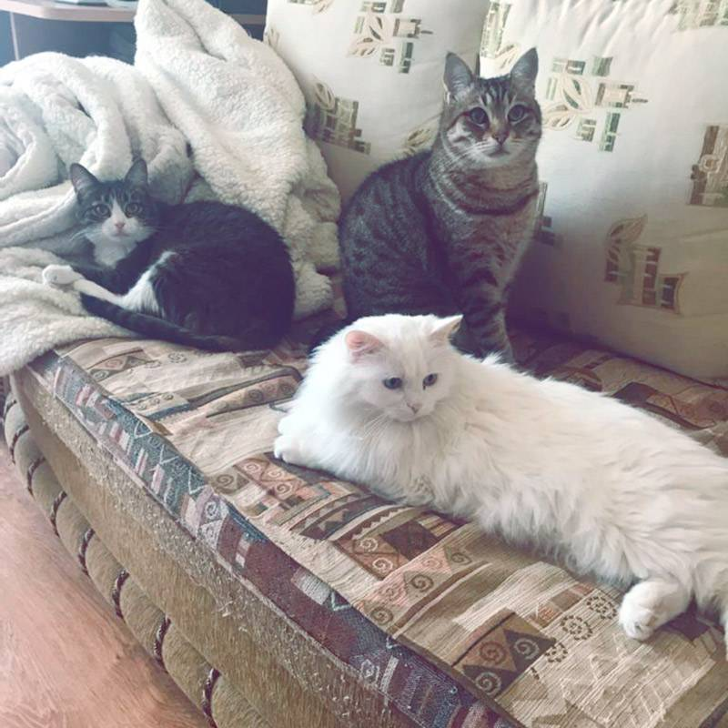 Уже традиционное фото кошек в дневнике трат