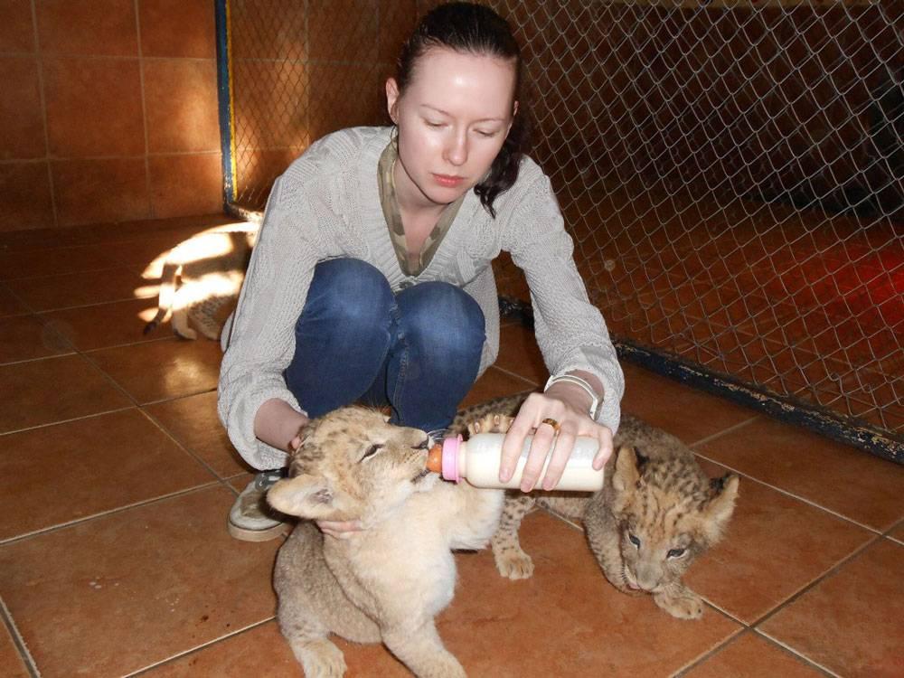 Кормить двухмесячных львят было самым приятным занятием в сафари-парке под Йоханнесбургом. Остальная работа была черной