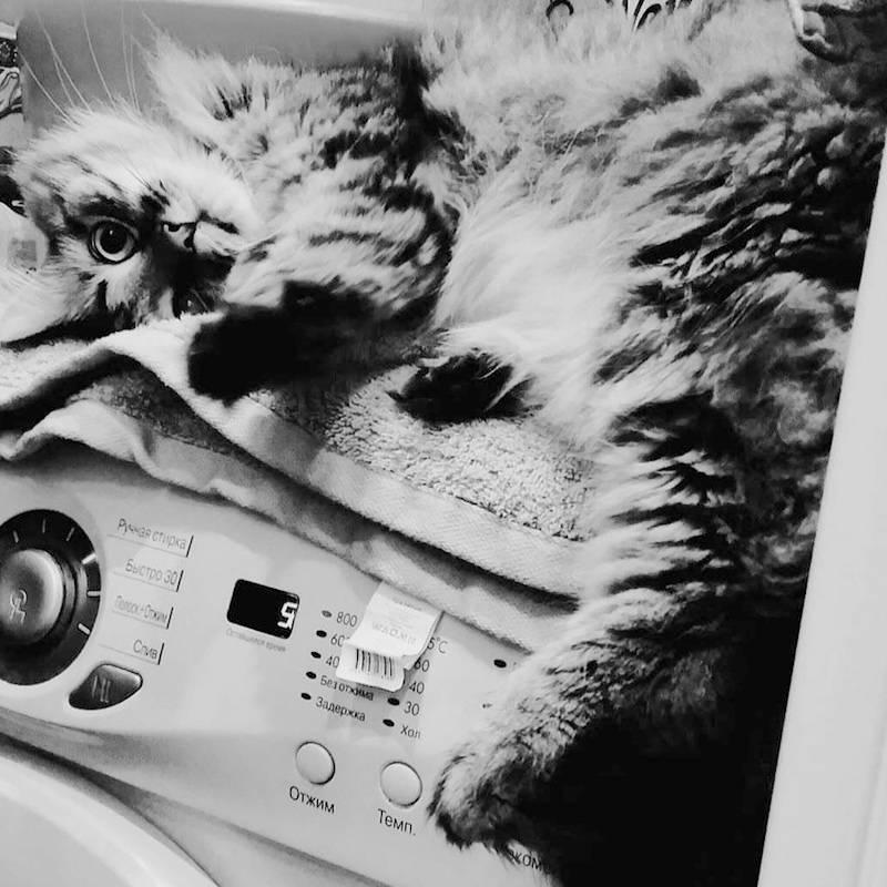 Кот всегда лежит на стиралке, пока я моюсь, и наблюдает за процессом