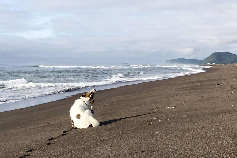 Халактырский пляж — этолиния тихоокеанского побережья в20км отПетропавловска. Онзнаменит тем, чтопокрыт черным вулканическим песком