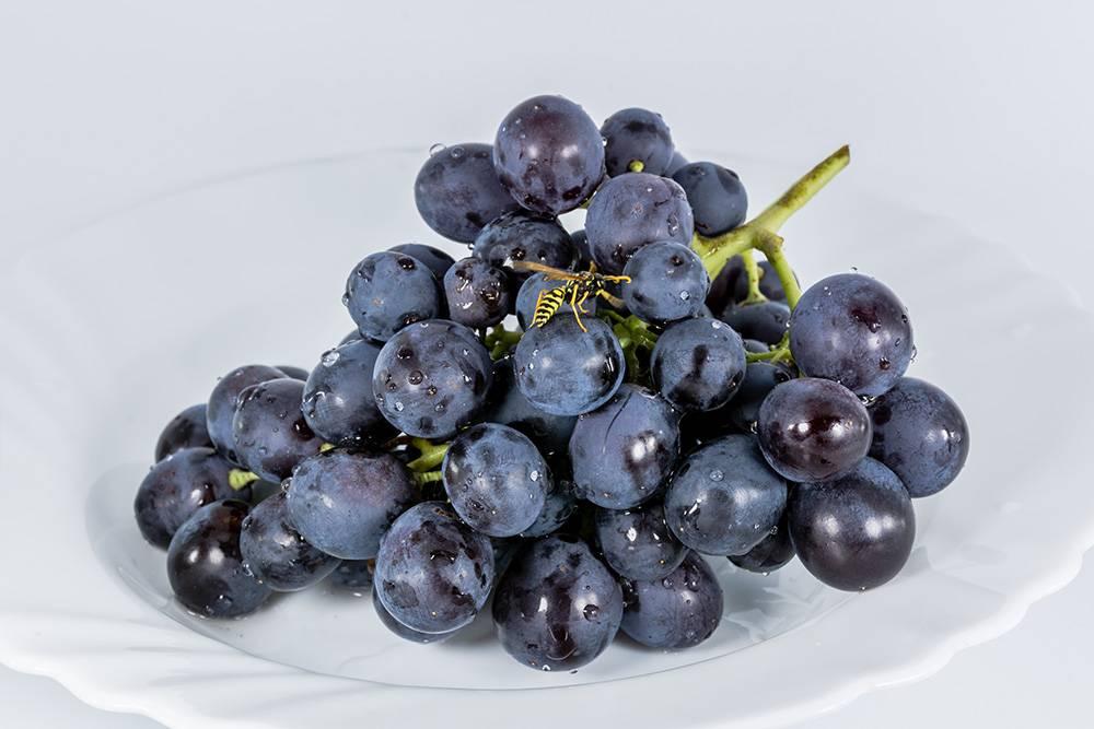 Если над виноградом вьются осы, он точно сладкий