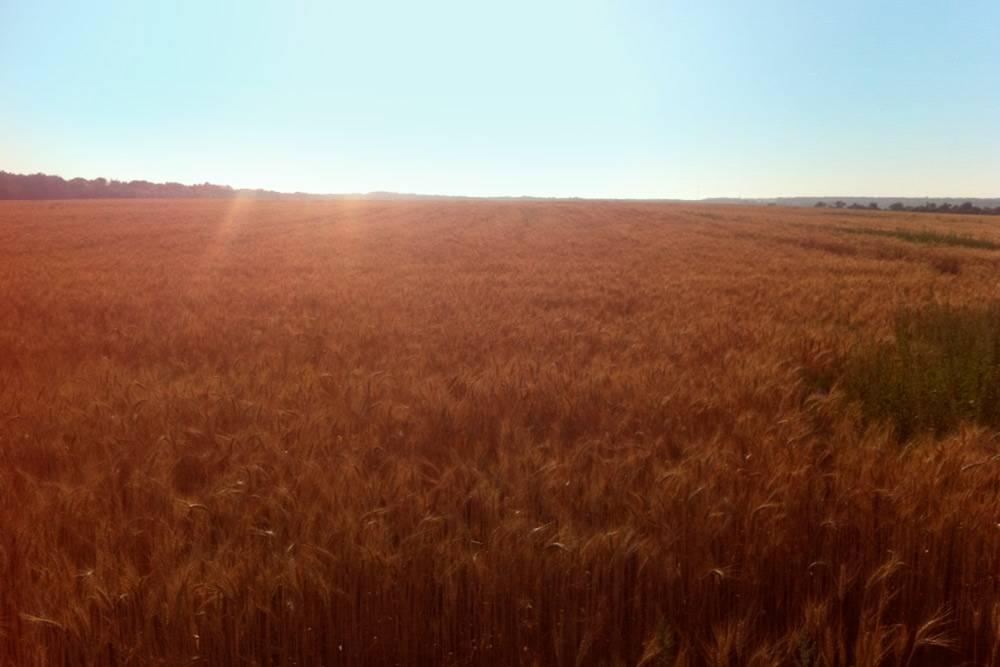 Роман до сих пор занимается выращиванием пшеницы и подсолнечника на земле, взятой в аренду в 2006 году. Наш герой предоставляет землю, партнер — свою технику, а семена и удобрения покупают пополам
