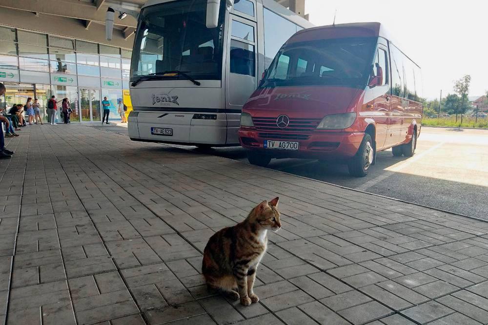 Заранее угадать, поедете вы на автобусе или микроавтобусе, не получится: это зависит от количества проданных билетов