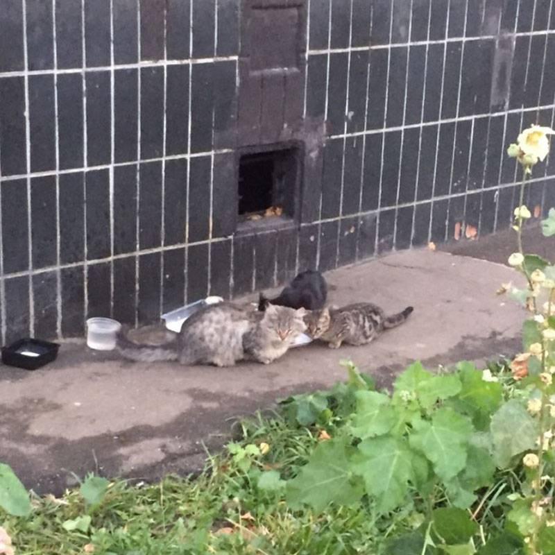 У этих кошек теперь всегда тонна еды