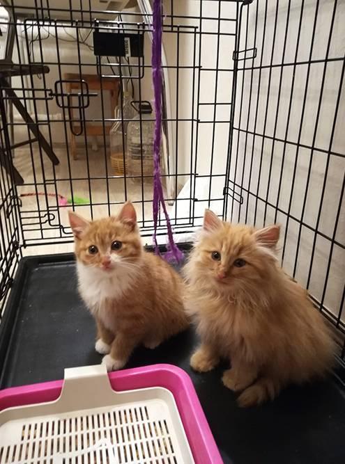 Котята, которых я спасла. Это Бусинка и Шуба
