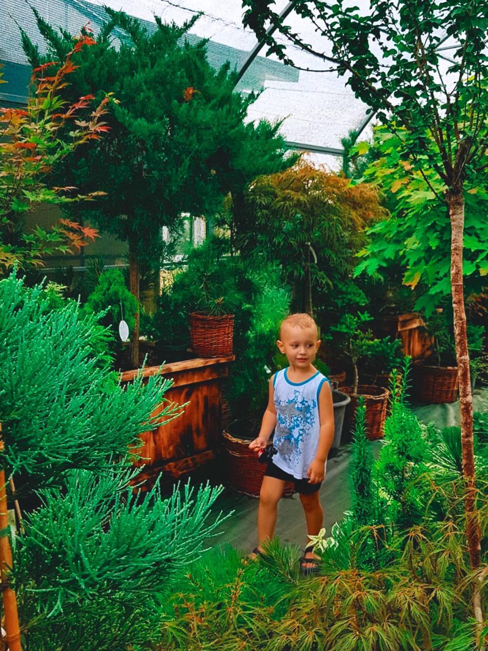 Саженцы почти любых растений в саду можно купить за очень скромную цену — от 30<span class=ruble>Р</span>