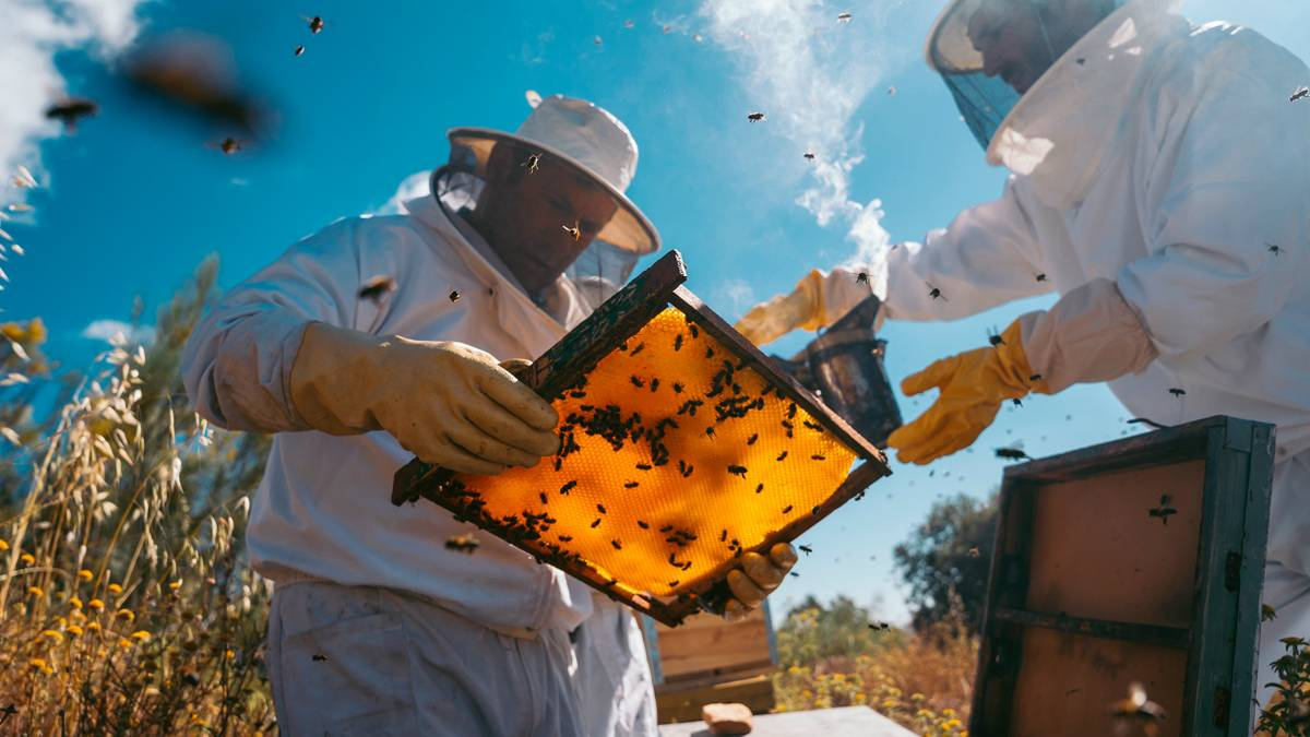 Краткий гайд по пчеловодству в 21 веке