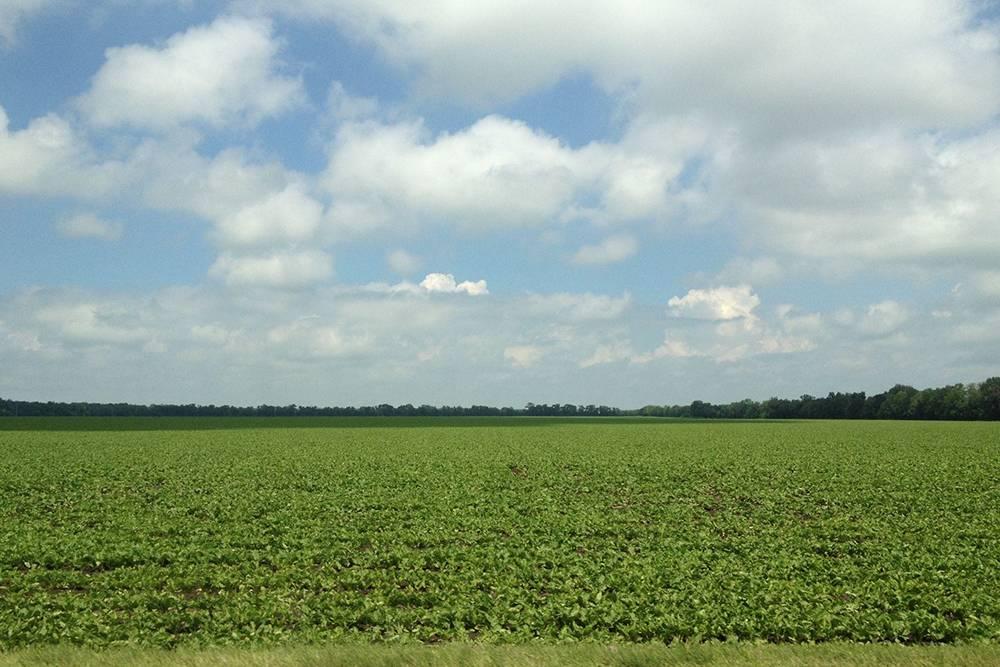 Чем мне нравятся автопутешествия — можно увидеть вот такие бескрайние поля. В городе подобных пейзажей не встретишь