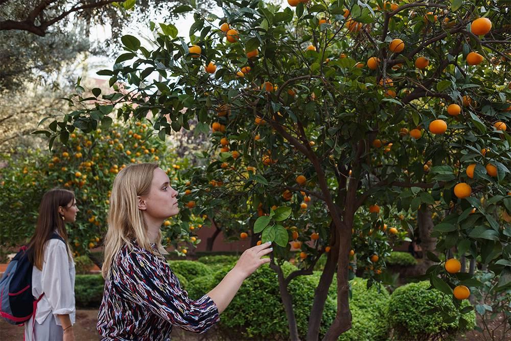 Больше всего туристов в парке у деревьев, усыпанных мандаринами