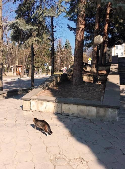 На улицах Кисловодска