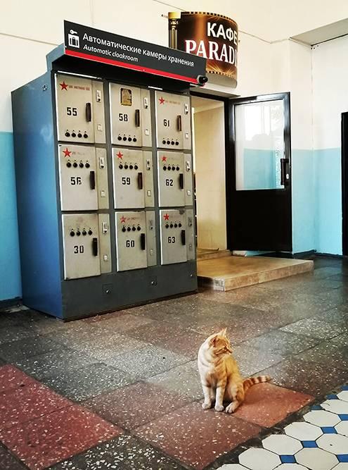Местный вокзал с камерами хранения по 50советских копеек и котейка. А то ни одного фото животного за дневник!