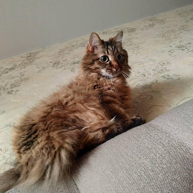 Кот охотится на солнечных зайчиков, прыгая по кровати