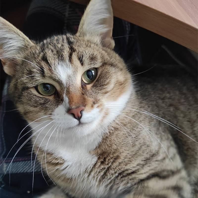 Девять месяцев, но это уже бравый кошак, а не котенок
