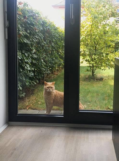 Каждый день я выпускаю погулять кошку в сад. На случай если она далеко уйдет, на ней светящийся в темноте ошейник с именем, телефоном и адресом хозяина