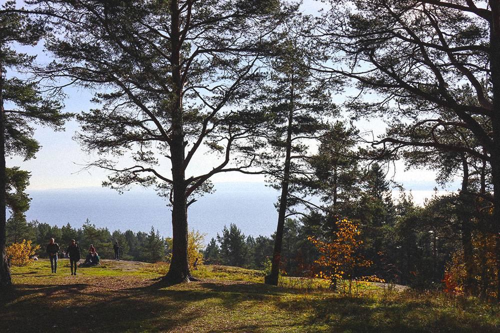 Вход на Чертов стул находится неподалеку от ботанического сада Петрозаводского госуниверситета. В конце мая там цветут десятки яблонь