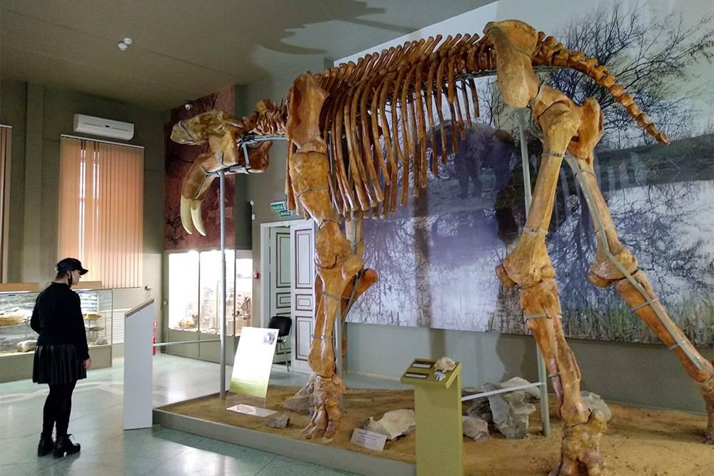 Динотерии населяли ростовскую землю 7,5—8 млн лет назад