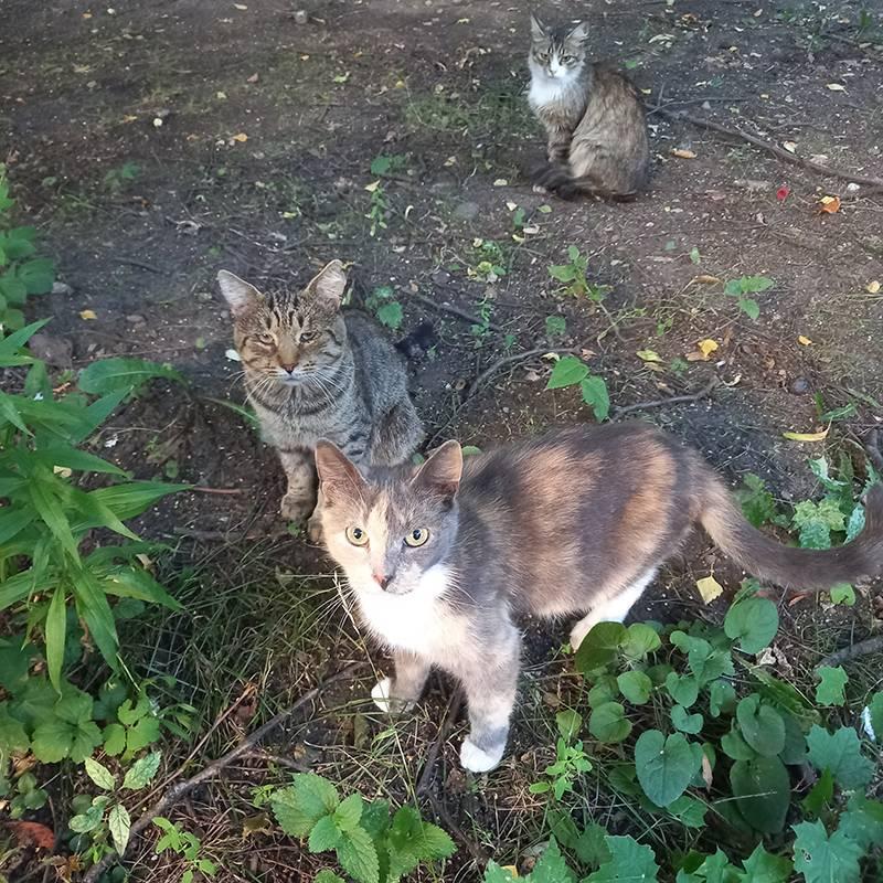 Отряд котов — они живут в подвале маминого дома