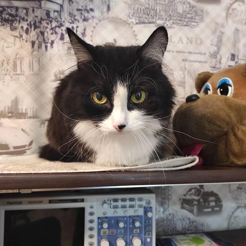 Кот явно скучает безхозяев