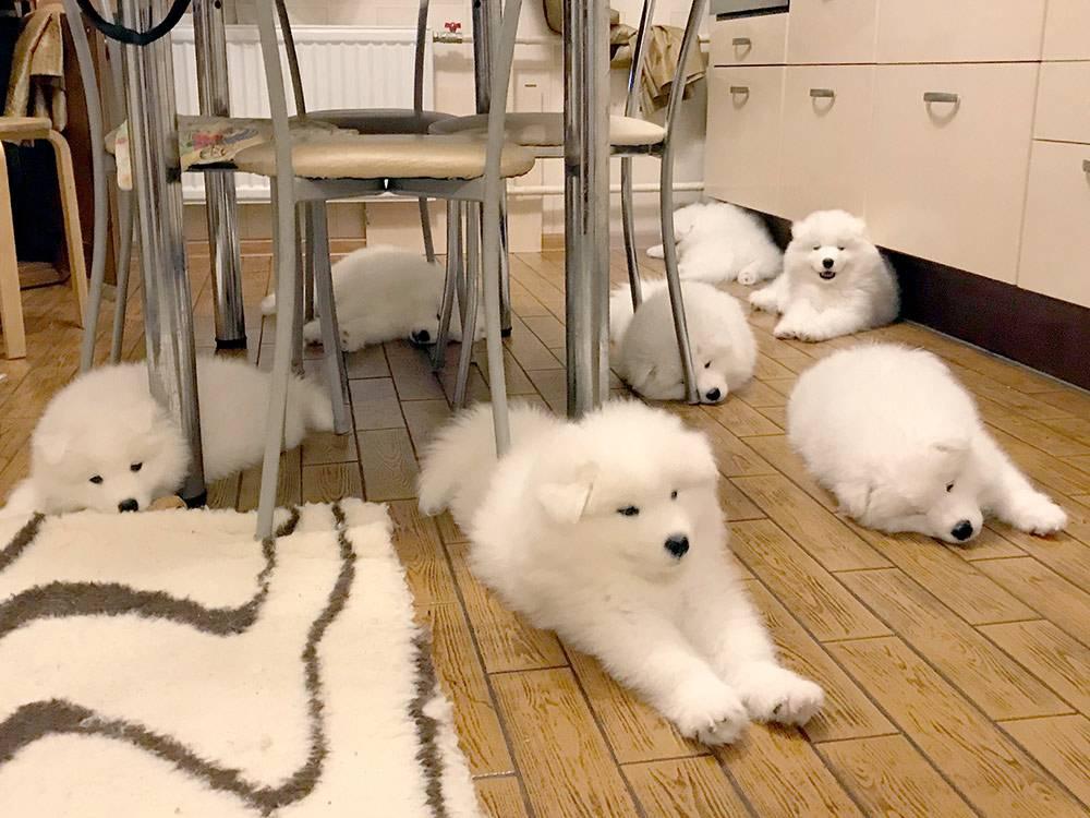 На беременность собаки, роды и выращивание щенков мы потратили 222 000 рублей
