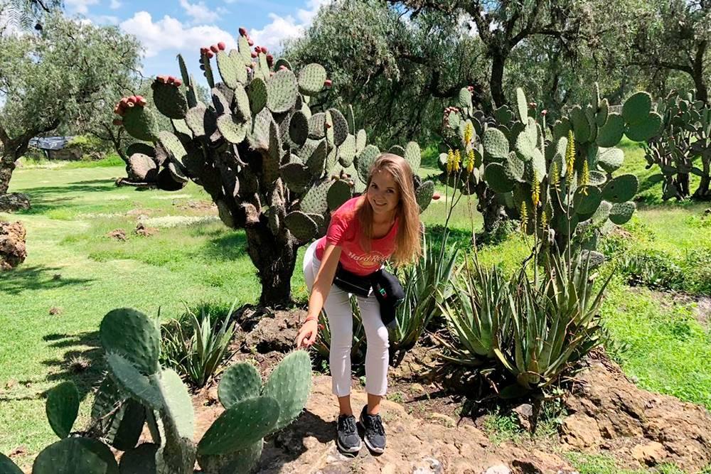 Это я в древнем мексиканском городе Теотиуакан с кактусами нопаль — их тут готовят и едят