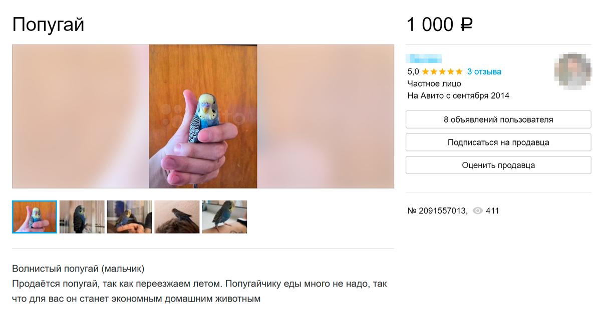 В некоторых объявлениях продавцы сразу объясняют причину продажи птичек. Источник: avito.ru