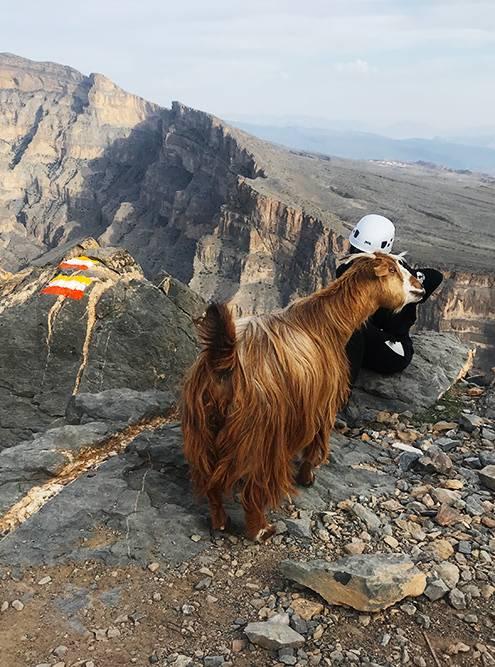 В горах часто можно встретить вот таких местных жителей
