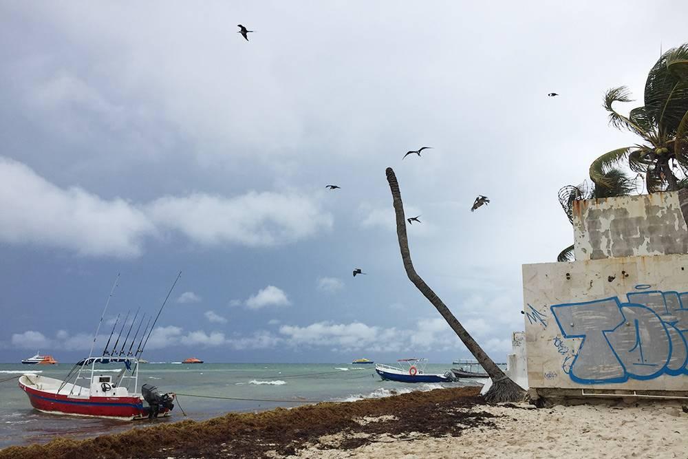 В мае в Мексике погода портится, чаще случаются дожди, к томуже в последние годы на берег выбрасывает саргассовы водоросли. Но за 10 дней, что мы там отдыхали, была всего пара пасмурных дней. На фото — пляж в городке Плая-дель-Кармен