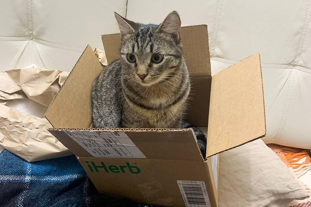 Котик помог распаковать