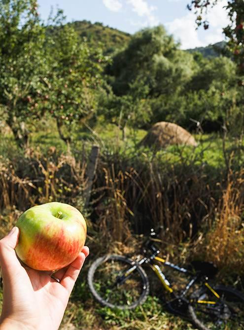 В Казахстане официально закреплено название «Алматы», что в переводе означает «яблоневый». За городом правда много фруктовых садов