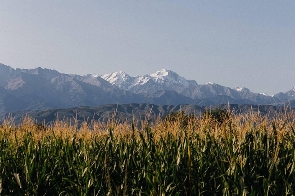 Поля, за ними — зеленые горы, а выше — снежные вершины